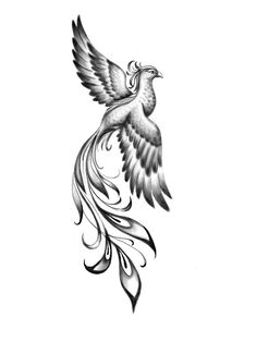 I really liked this one to work in shadow. And the position runs away from the cliché that … - tatoo feminina Phoenix Tattoo Feminine, Small Phoenix Tattoos, Phoenix Tattoo Design, Small Tattoos, Rising Phoenix Tattoo, Tattoo Ave Fenix, Fenix Tattoos, Tattoo Design Drawings, Tattoo Sketches