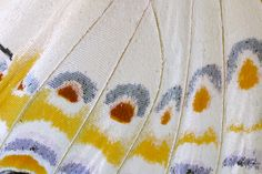 Butterfly Wing close-up photographed by: Darrell Gulin