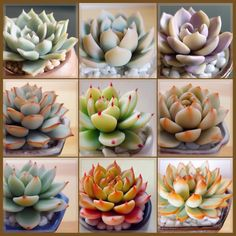 Polymer Clay Kawaii, Polymer Clay Crafts, Polymer Clay Jewelry, Cacti And Succulents, Planting Succulents, Clay Dragon, Cactus Y Suculentas, Clay Figures, Biscuit
