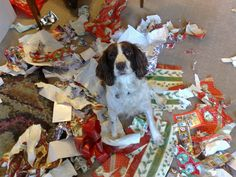 dogs at christmas | Recent Photos The Commons Galleries World Map App Garden Camera Finder ...