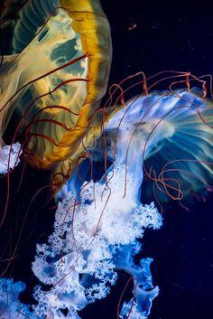 Jellyfish are so photogenic.