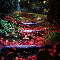 Autumn path steps