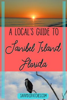 A comprehensive guide to Sanibel Island in the state of Florida, USA including things to do on Sanibel, seasonal activities on Sanibel, the best shelling on Sanibel, and more tips for your trip to Sanibel. Visit Florida, Florida Usa, Florida Vacation, Florida Travel, Florida Beaches, Travel Usa, Clearwater Florida, Sarasota Florida, Sandy Beaches