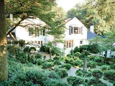 ~ boxwood and ivy