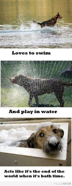 My dog Seis - is seriously exactly like this. Play in the pond all day long - but it's like murder to get her to take a bath!