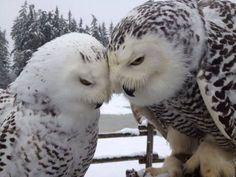 l'amore è amore