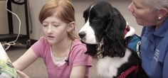 cancer-patient-5 -- adorable springer spaniel therapy dog