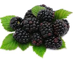 Health Benefits of Blackberry | Organic Facts