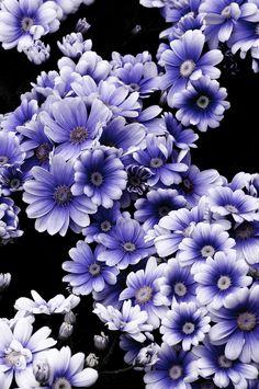 Nature by Makoto Shukawa / ambientime All Flowers, Amazing Flowers, My Flower, Purple Flowers, White Flowers, Beautiful Flowers, Flower Pictures, Dream Garden, Planting Flowers
