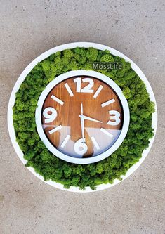 Interior clock with moss :)
