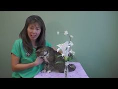 (5) Top Poisons That Cats Get Into! | Dr Justine Lee - YouTube Poisons, Cute Animal Pictures, Cat Lovers, Cute Animals, Cats, Youtube, Top, Life, Pretty Animals