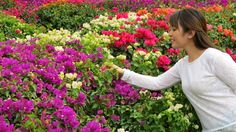 <flowers>