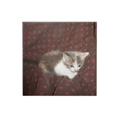 Kitten Chillin #Ceramic #Tiles!  #Cute #kittens galore are in my #zazzle #store!  http://www.zazzle.com/conquestkitty*