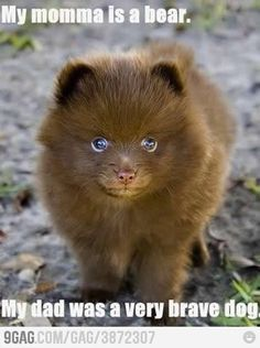 cute animals with captions | with captions by rebecca on august 28 2012 in animal jokes animal ...