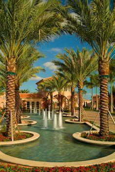 43 Best Palm Trees Images Palm Trees Palm Palm Tree Types
