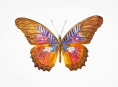 Orange and Brown Butterfly-butterfly, moth, insectbyDinahWells