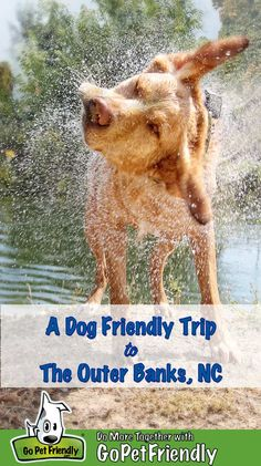 Get the inside scoop on dog friendly beaches historical sites charming towns and more that await you and your pup in North Carolina's Outer Banks. Dog Training Treats, Best Dog Training, Best Dog Toys, Best Dogs, Asian Dogs, Wonder Pets, Durable Dog Toys, Dog Travel, Travel Usa