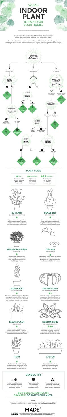 INFOGRAPHIC: Which indoor plant is right for you? | Inhabitat – Sustainable Design Innovation, Eco Architecture, Green Building