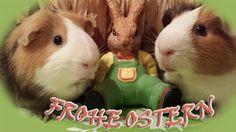 Happy Easter Happy Easter, Rabbit, Animals, Happy Easter Day, Bunny, Rabbits, Animales, Animaux, Bunnies