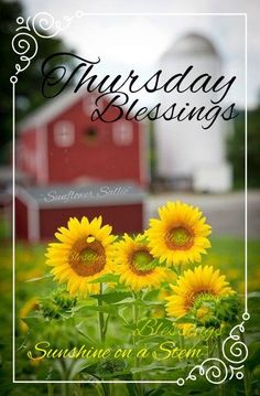 Happy thursday greetings more pinterest happy happy thursday m4hsunfo