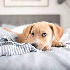 Bildergebnis für hund