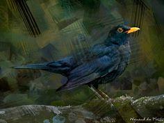 Bird photos turned into BIRD ART - Blackbird - Fine Art Prints - Canvas Prints Abstract Photos, Abstract Canvas, Canvas Art Prints, Fine Art Prints, Photo To Art, Art Prints Online, Bird Artwork, Blackbird, Creative Art