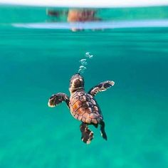 I want to have a date at the turtle aquarium. - Linda Go - I want to have a date at the turtle aquarium. I want to have a date at the turtle aquarium. Cute Creatures, Sea Creatures, Beautiful Creatures, Animals Beautiful, Animals And Pets, Funny Animals, Animals Sea, Animals Images, Funny Cats