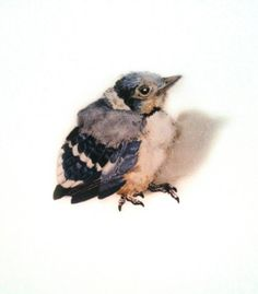 Baby Bird Bluejay Limited Edition Giglee Art by MagpieofHedgerow, $27.00