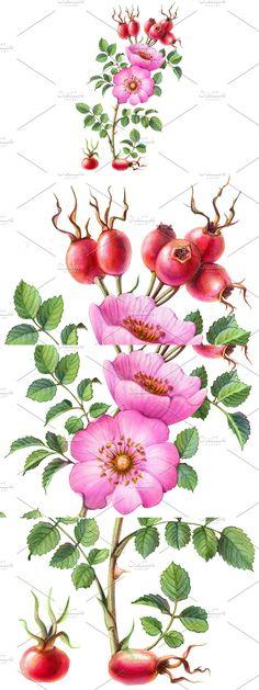 Pencil Design, Pencil Drawings, Flowers, Plants, Pink, Florals, Planters, Flower, Blossoms