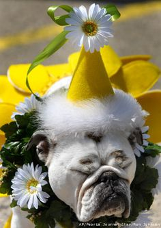 """❤ Happy Halloween. Either Lucy is having a """"zen"""" moment or doesn't want to """"see herself"""" dressed in a sunflower skirt with a daisy hat. ❤"""