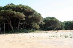 """#Huelva - #Cartaya - Paraje natural de la Flecha de El Rompido.  37º 12' 58"""" - 7º 7' 43"""".  Cartaya posee un entorno natural privilegiado, donde se dan cita diversos paisajes y ecosistemas gracias a los cuales tres de esos enclaves han sido catalogados como Espacios Protegidos."""