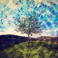 trippy tree