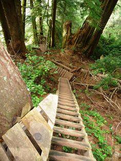 West Coast Trail Journal