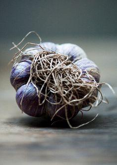 / garlic