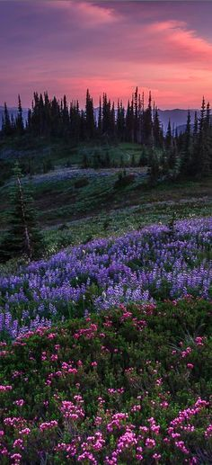 Pastel splendor in the Nisqually Valley of Washington