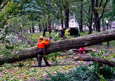 Tree Removal and Stump Grinding - Scapes Incorporated http://www.scapesincorporated.com/services/tree-care-and-services/tree-removal-and-stump-grinding/