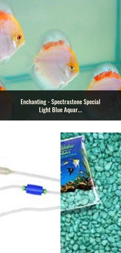 Aquariums & Tanks Pet Supplies Brilliant Aquarium Fish Tank Undergravel Filter 24p