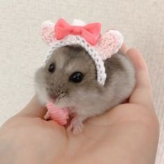 January 10 2020 at Baby Animals Super Cute, Cute Little Animals, Cute Funny Animals, Funny Squirrel Pictures, Funny Animal Pictures, Hamster Pics, Funny Hamsters, Animal Tumblr, Cute Rats