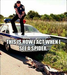 Police spider