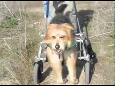 Disabled Dog Rides Quad Cart