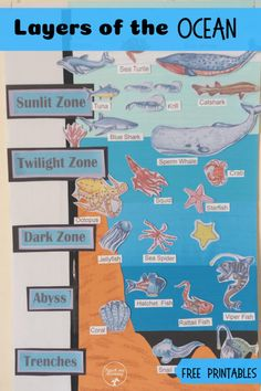 Layers of the Ocean activity with free printables! Science Activities For Kids, Preschool Activities, Preschool Education, Early Learning, Kids Learning, Learning Tools, Layers Of The Ocean, Ocean Zones, Ocean Habitat