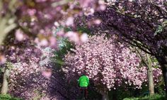 Photo highlights of the day from the Guardian - a beautiful spring day.