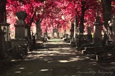 Graveyard Photography, Cemetery, Surreal, Pink Trees, Headstones, Path, Statues, Spiritual,  Religious, Fine Art Photography - Imagine. $30.00, via Etsy.