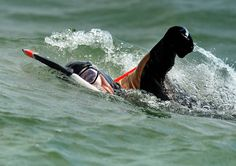 En 2008, Philippe Croizon, amputé des 4 membres, traverse la manche à la nage.