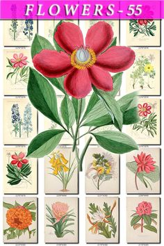 FLOWERS-55 Collection of 118 vintage images by ArtVintage1800s