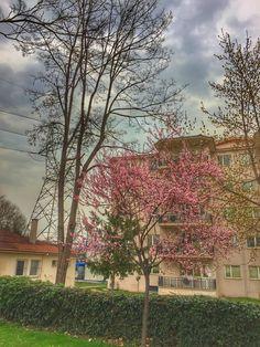 #photography #natural #anlık #doğa #botanik #pink #doğal