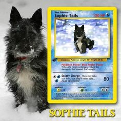 Artist Illustrates Pets Into Pokemon Cards And They Look Absolutely Adorable Pokemon Trading Card, Pokemon Cards, Custom Cards, Card Games, Pets, Illustration, Artist, Personalized Cards, Illustrations