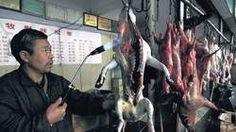 Honden en katten levend in de frituur - dat moet stoppen!