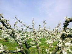 Campos de frutales; Sant Boi del Llobregat (Cataluña, España) Cool, Fruit, Fields, Bass