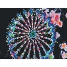 Wild flowers - Acrylic Key Ring - http://robsemporium.com/product/wild-flowers-acrylic-key-ring-3/